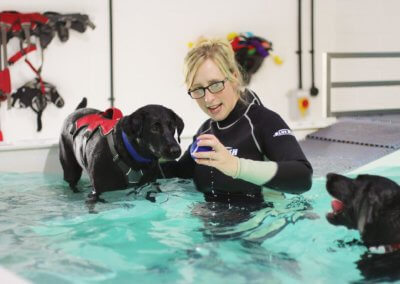 Canine hydrotherapy physiotherapy work placement
