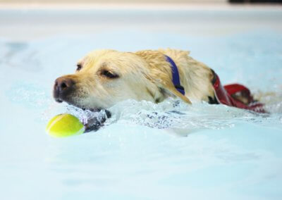 Fitness and fun swim sessions for dogs kidderminster