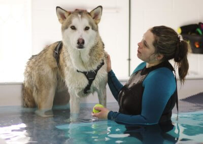 k9-hydro-therapy-for-dogs_theteamlaura