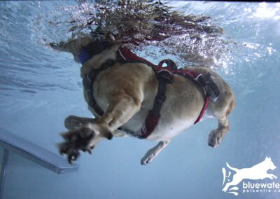 Underwater View Dog Swimming Pool