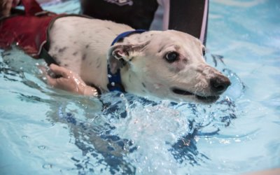 Hydrotherapy for Spinal Injuries