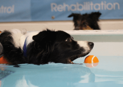 hydrotherapy-mobile