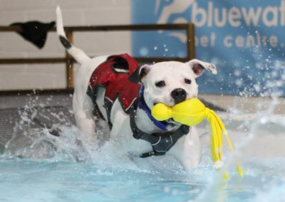 Doggy paddle pool for dogs droitwich