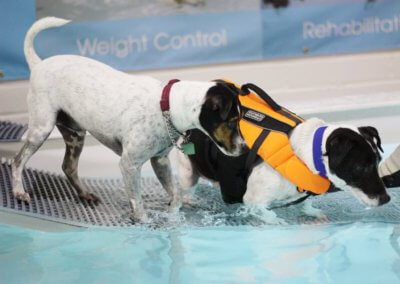 Hydro therapy swimming for weight problems with dogs