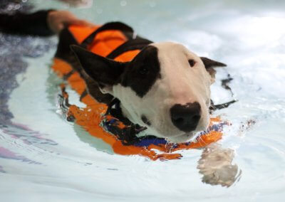 Birmingham canine hydrotherapy centre for swimming dogs