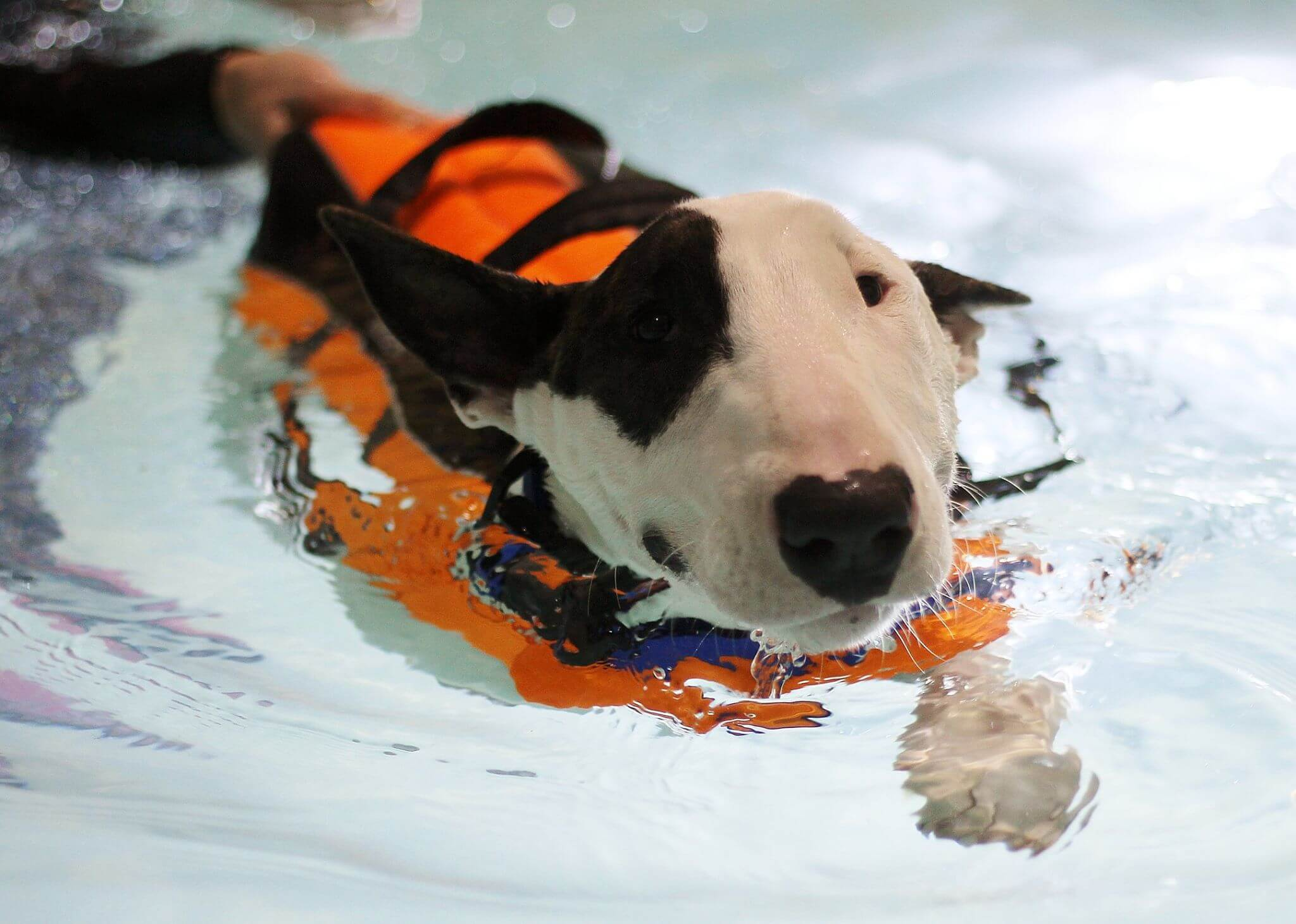 Gallery Bluewaters Canine Hydrotherapy