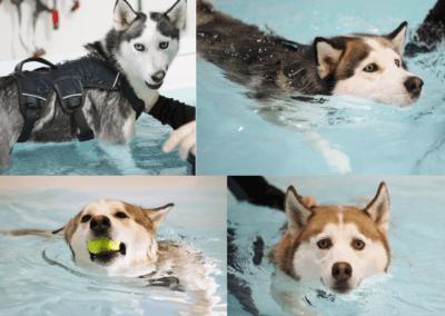 Keito, Mishka, Loki & Cooper – Fitness