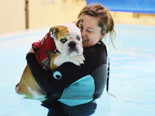 Reggie – Fitness / Puppy Swim